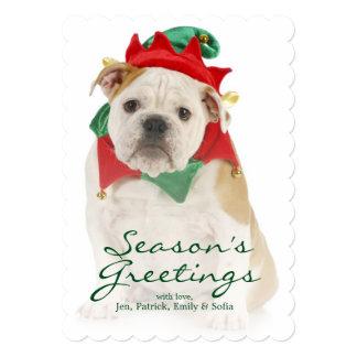 English bulldog dressed as elf card