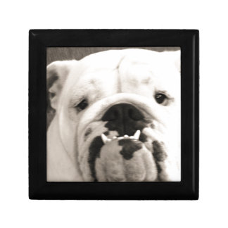 English Bulldog Jewelry Box