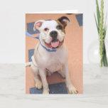 English Bulldog Mix Photo Card