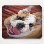 English Bulldog Mousepads