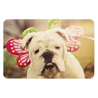 English Bulldog Photo Art Large Flexi Magnet