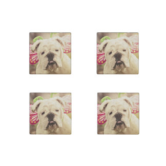 English Bulldog Photo Art Stone Magnets