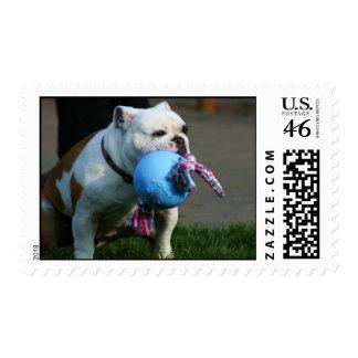 English bulldog postage