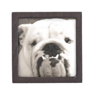 English Bulldog Premium Gift Boxes