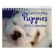 English Bulldog Puppies 2016 Calendar