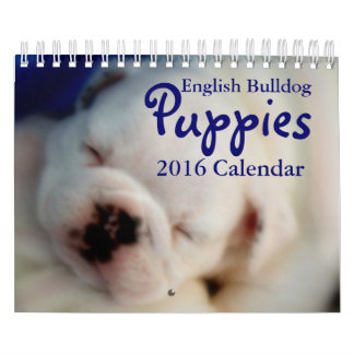 English Bulldog Puppies 2016 Calendar