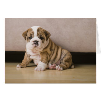 English bulldog puppies card