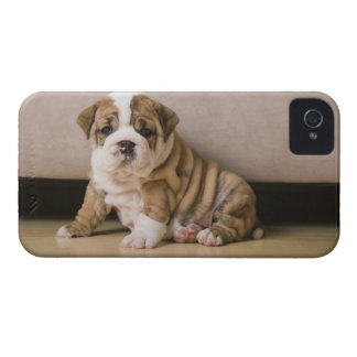 English bulldog puppies iPhone 4 Case-Mate cases