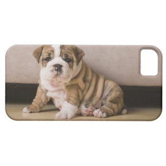 English bulldog puppies iPhone SE/5/5s case