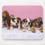 english bulldog  puppies mouse pad