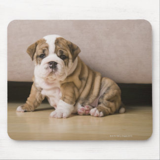 English bulldog puppies mouse pad