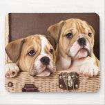 English Bulldog Puppies Mousepad