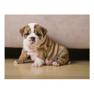 English bulldog puppies postcard