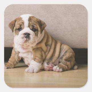 English bulldog puppies square sticker