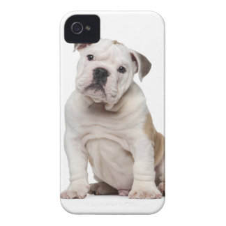 English bulldog puppy (2 months old) Case-Mate iPhone 4 cases