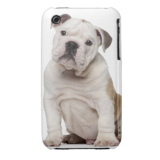 English bulldog puppy (2 months old) iPhone 3 cover