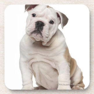 English bulldog puppy (2 months old) drink coasters
