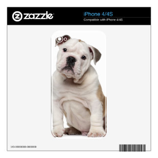 English bulldog puppy (2 months old) decal for iPhone 4