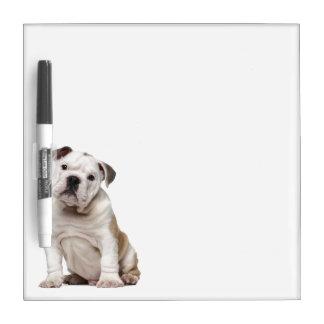 English bulldog puppy (2 months old) dry erase board