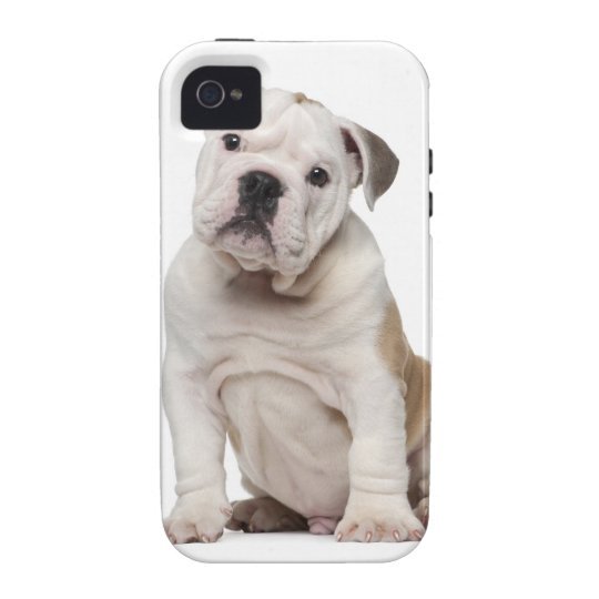 English bulldog puppy (2 months old) iPhone 4/4S cover