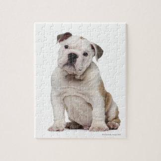 English bulldog puppy (2 months old) jigsaw puzzle