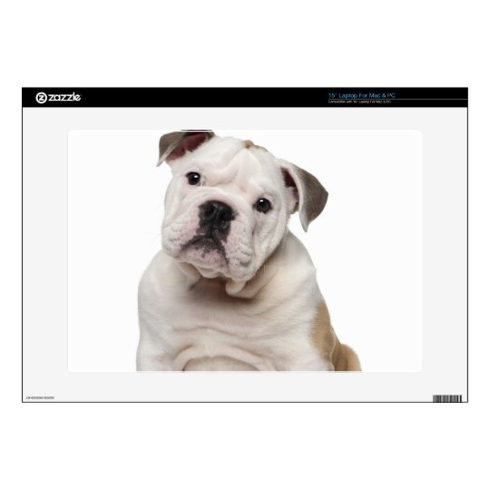 English bulldog puppy (2 months old) laptop decal