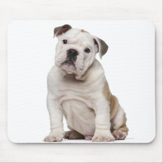 English bulldog puppy (2 months old) mouse pad
