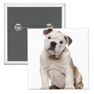 English bulldog puppy (2 months old) pinback button