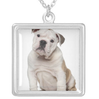English bulldog puppy (2 months old) silver plated necklace