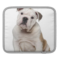 English bulldog puppy (2 months old) sleeve for iPads