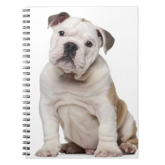 English bulldog puppy (2 months old) spiral notebook