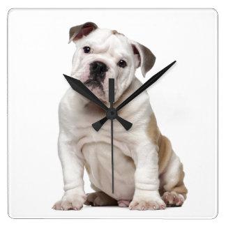 English bulldog puppy (2 months old) square wall clock