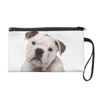 English bulldog puppy (2 months old) wristlet