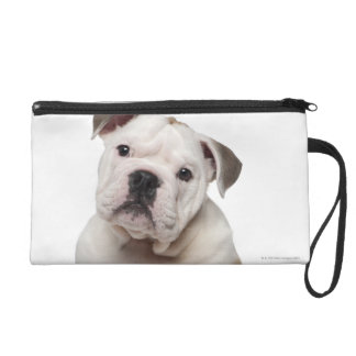 English bulldog puppy (2 months old) wristlet purse