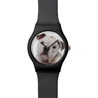 English bulldog puppy (2 months old) wristwatch