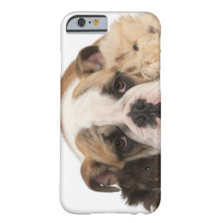 english bulldog puppy (4 months old) and two barely there iPhone 6 case