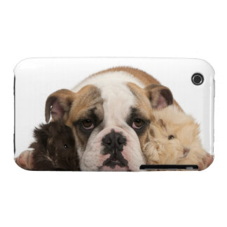 English bulldog puppy (4 months old) and two iPhone 3 Case-Mate cases
