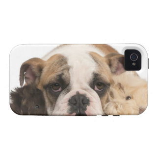 english bulldog puppy (4 months old) and two Case-Mate iPhone 4 cases