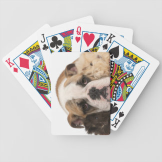 English bulldog puppy (4 months old) and two guine bicycle playing cards