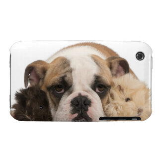 English bulldog puppy (4 months old) and two guine iPhone 3 case