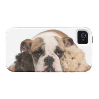 English bulldog puppy (4 months old) and two guine Case-Mate iPhone 4 covers