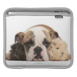 English bulldog puppy (4 months old) and two guine sleeve for iPads