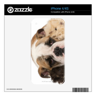 English bulldog puppy (4 months old) and two guine iPhone 4 skins