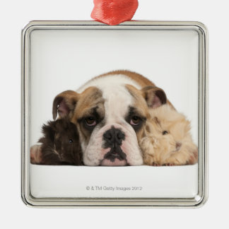 English bulldog puppy (4 months old) and two guine metal ornament