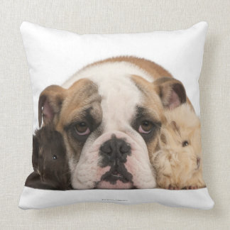 English bulldog puppy (4 months old) and two guine throw pillow