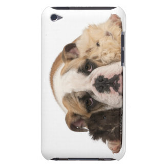 English bulldog puppy (4 months old) and two iPod Case-Mate cases