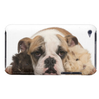 English bulldog puppy (4 months old) and two iPod touch covers