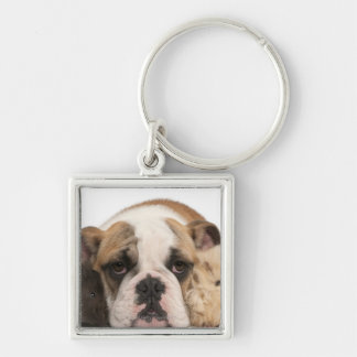 english bulldog puppy (4 months old) and two keychain
