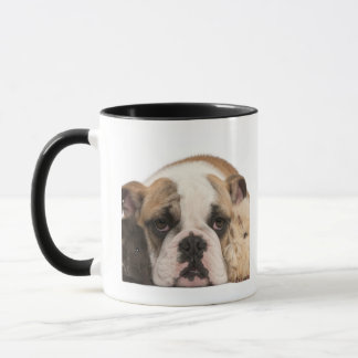 english bulldog puppy (4 months old) and two mug
