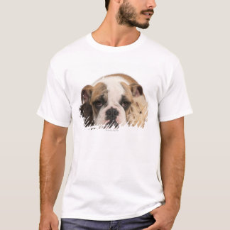 english bulldog puppy (4 months old) and two T-Shirt